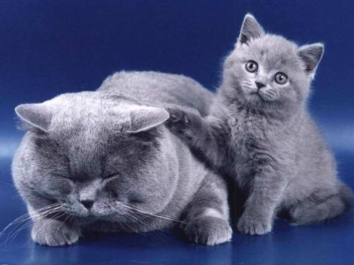 Животные.. и их семейные фото =) гг