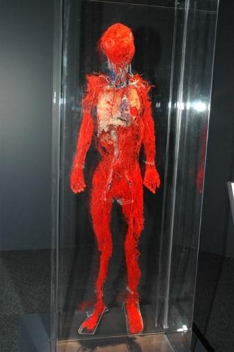 Выставка забальзамированных трупов