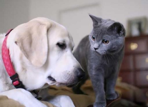 Живут как кошка с собакой)))))