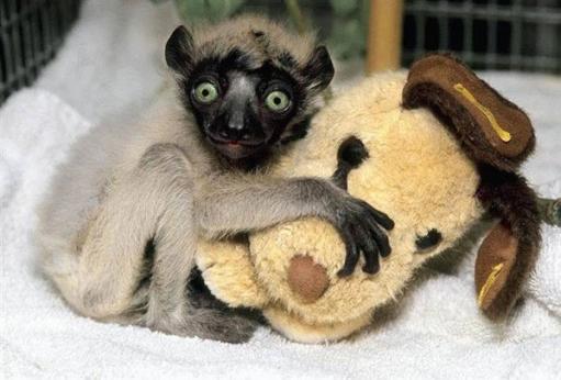 Веселые фото животных