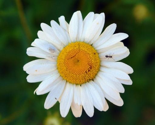 Солнце, цветы, позитивчик
