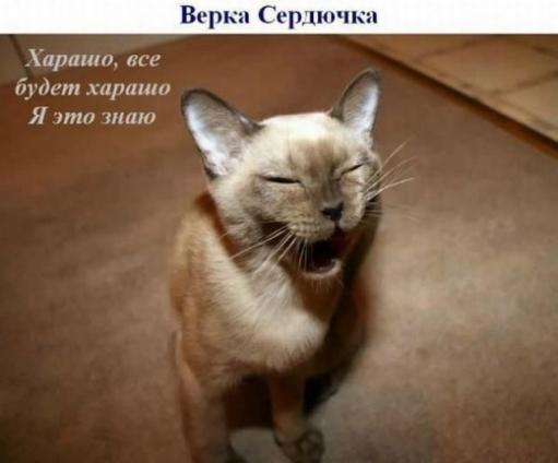Большая подборка Кошек - ЗВЕЗД!!!