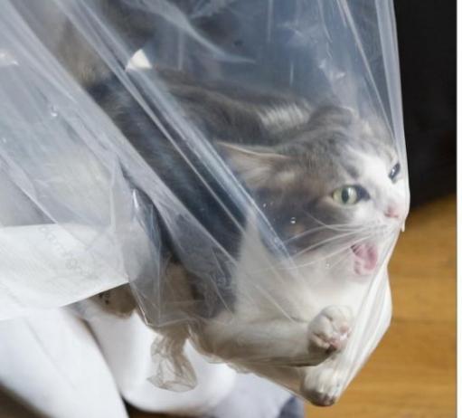 Кошак + кулек = :D