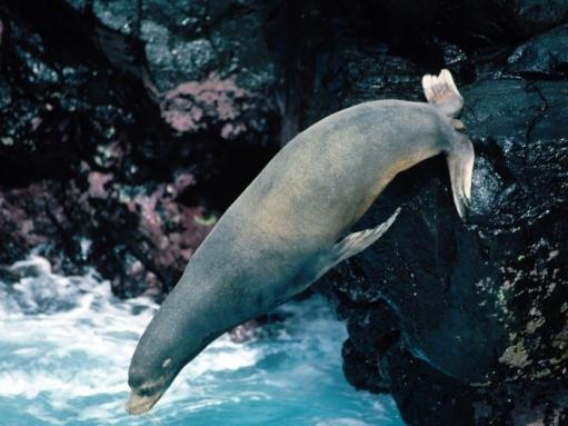 Ох уж эти морские котики (Фото + ЖУТЬ ФОТО)