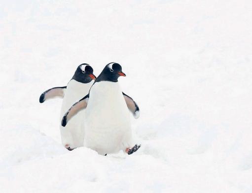 Пингвины (очень много фото)