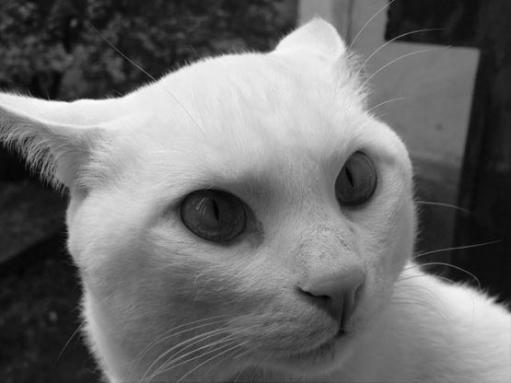 Кошачий позитив (Часть 2)