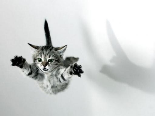 Ох уж эти ПОЗИТИВНЕЙШИЕ Коты!!!!