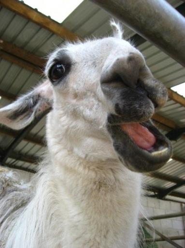 Позитивные и иногда смешные животные