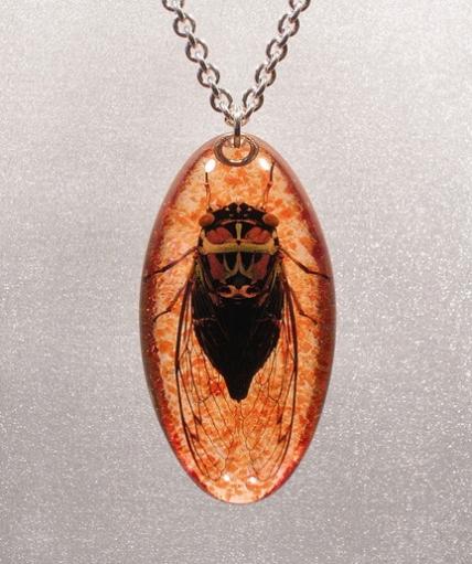 Красисивые украшения из насекомых