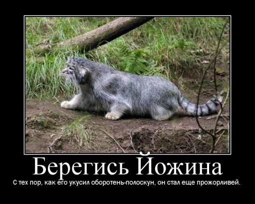 Погладь кота, ****! или МАНУЛОМАНИЯ