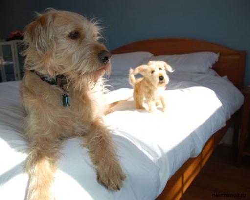 Собаки и их игрушечные копии