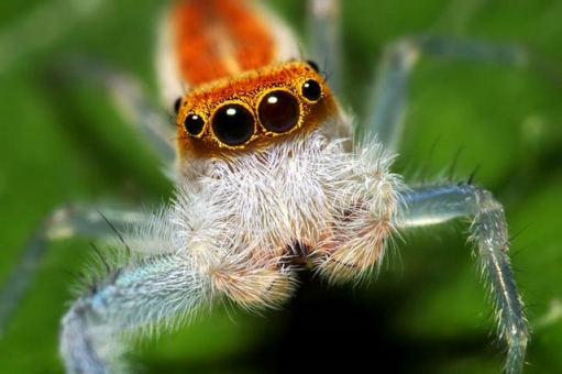 Паучки, маленькие миоые создания