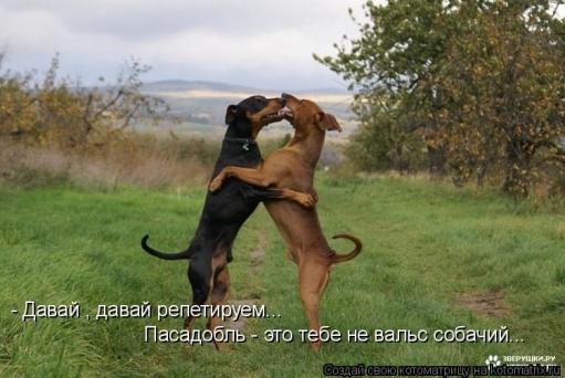 Подборка очень смешных фоток животных с интересными подписями к ним. (!ОЧЕНЬ МНОГО ФОТО!)