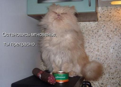 Фото животных и СМЕШНЫЕ подписи к ним :D