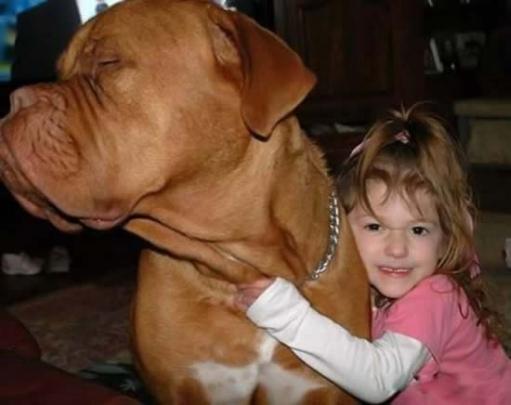 Милые фото очаровательной собаки!!! Собака и мячик =)