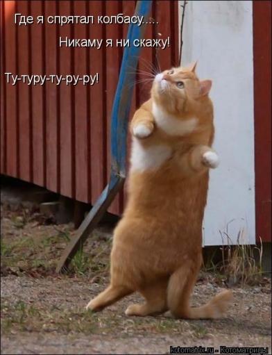 Смешные фото животных с прикольными подписями (котоматрицы)