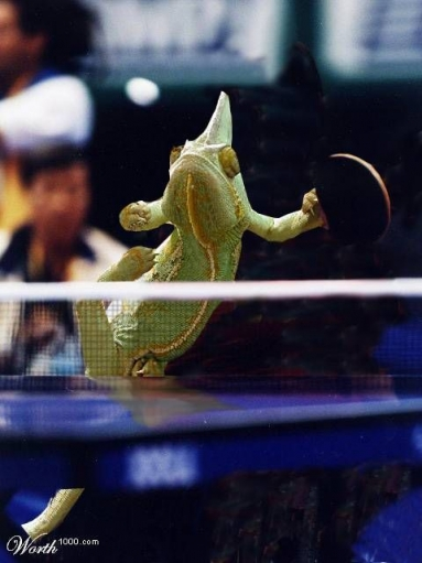 Животные и спорт (Фотожабы) Часть 2