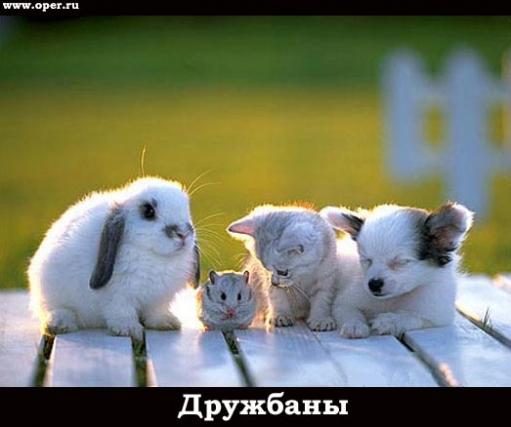 Интересная подборка фотографий с грызунами (фото)