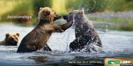 """Animal Planet - креативная реклама: """"Мы не такие уж и разные"""""""