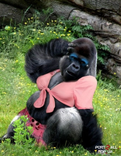 Девушка из животного в Photoshop'e или неопнятный фотошоп)