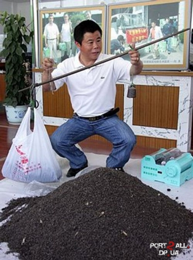 Человек 10 лет собирал МУХ (13 000 000 штук).