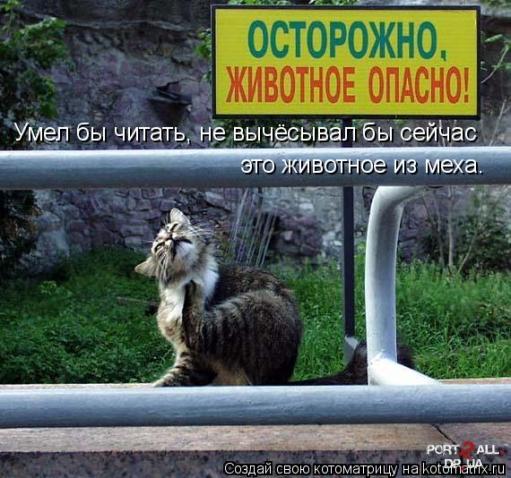 Подюорище зачетных котоматриц))))