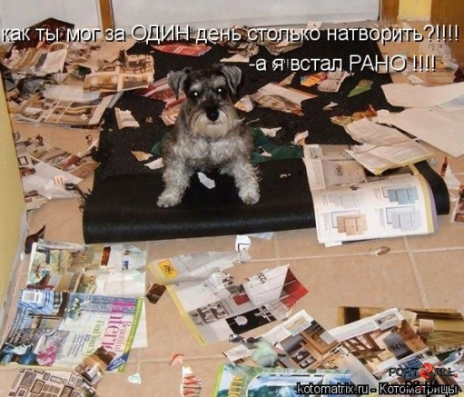 Подборка прикольных фото животных с подписями (котоматриц) (Часть2)