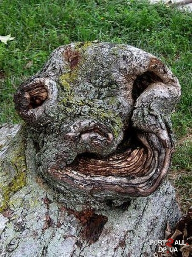 Страшные деревье. Страшное дерево.