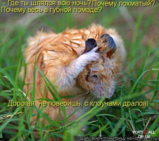 Подборка смешных фото животных + подписи к ним.