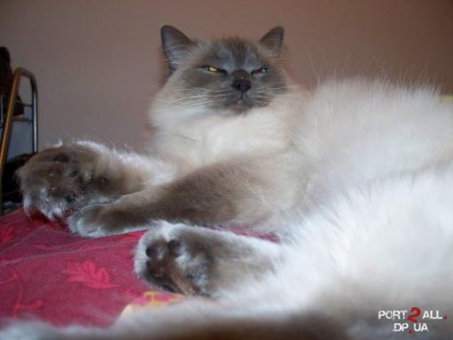 """Фото """"Только что разбуженный кот :D"""""""