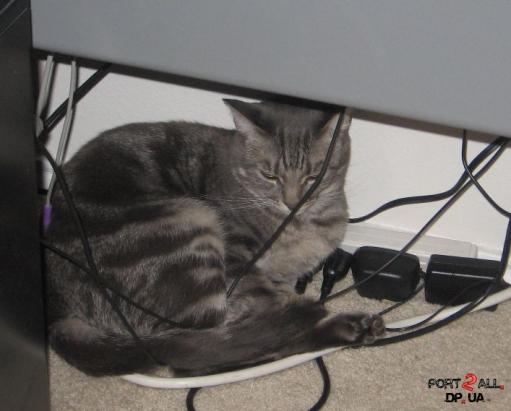Фото котов которых только что разбудили :D