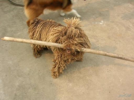 Собака - мочалка
