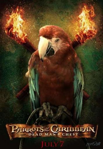 Животные вместо людей в всемирно известном кино. Кино о животных..