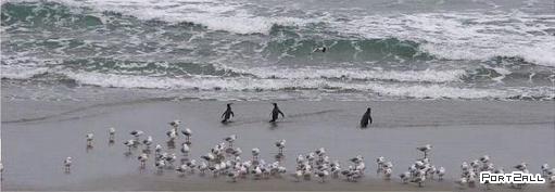 Крутые пингвины