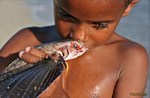 Рыба - летунья. Летающая рыба. (Фото + инфа)