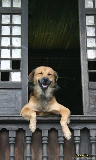 Смешные, прикольные собаки