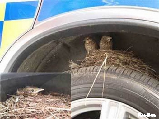 Наглые птицы.