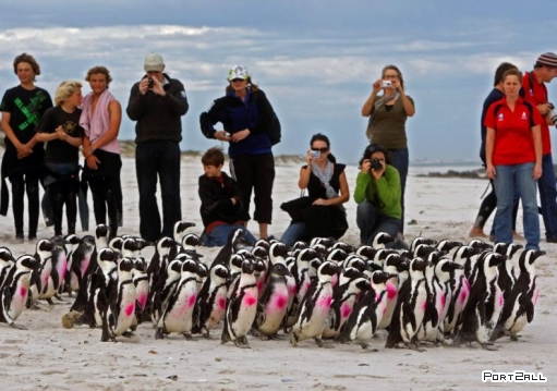Спасение пингвинов
