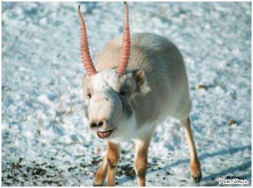 Необычные животные)) Такого вы еще не видели!