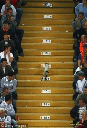 Кот из финала кубка УЕФА