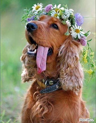 Лучший позитив с животными! Позитивные фото животных!