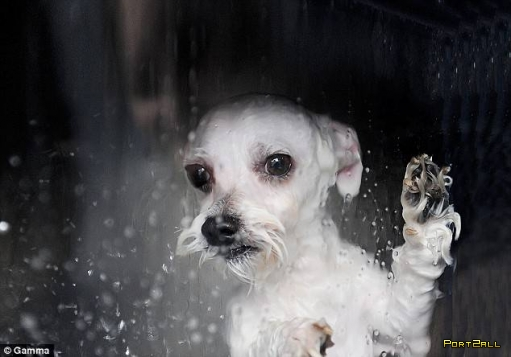 Мойка для собак (4 фото)