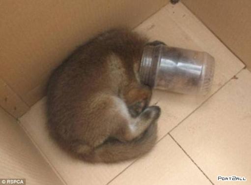 Слишком жадный кот (2 фотографии)