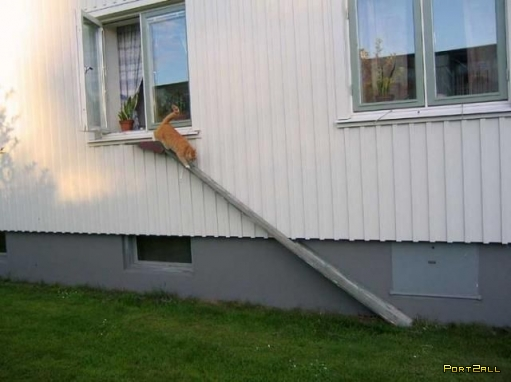 Лестницы для кошек!