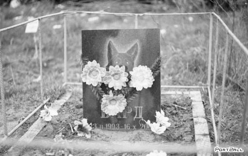 Кладбище домашних животных =(