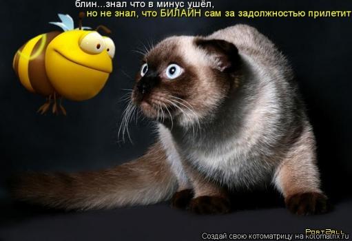 Любителям животных: котоматрицы! (21 фото)