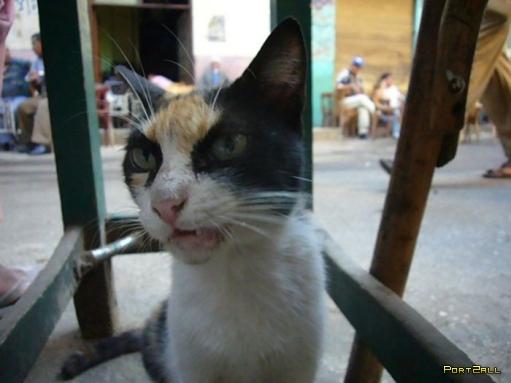 Очень злая кошка! Злая киска :D