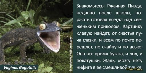 """Население сети в подробностях! """"Сетятам о зверятах"""""""""""