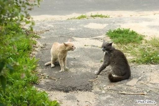 Жестокий кото-махач (4 фото)