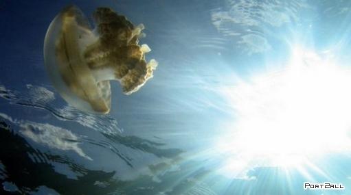 Небольшое царство медуз на западе Карибского моря.